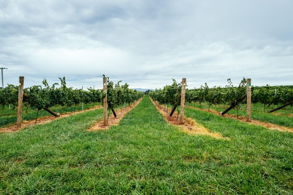 Spring Vale Vineyard by @sideprjct